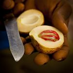 Nutmeg.  Terrence Coombes. CC BY SA 4.0 Premier prix du concours Wiki Loves Africa 2014